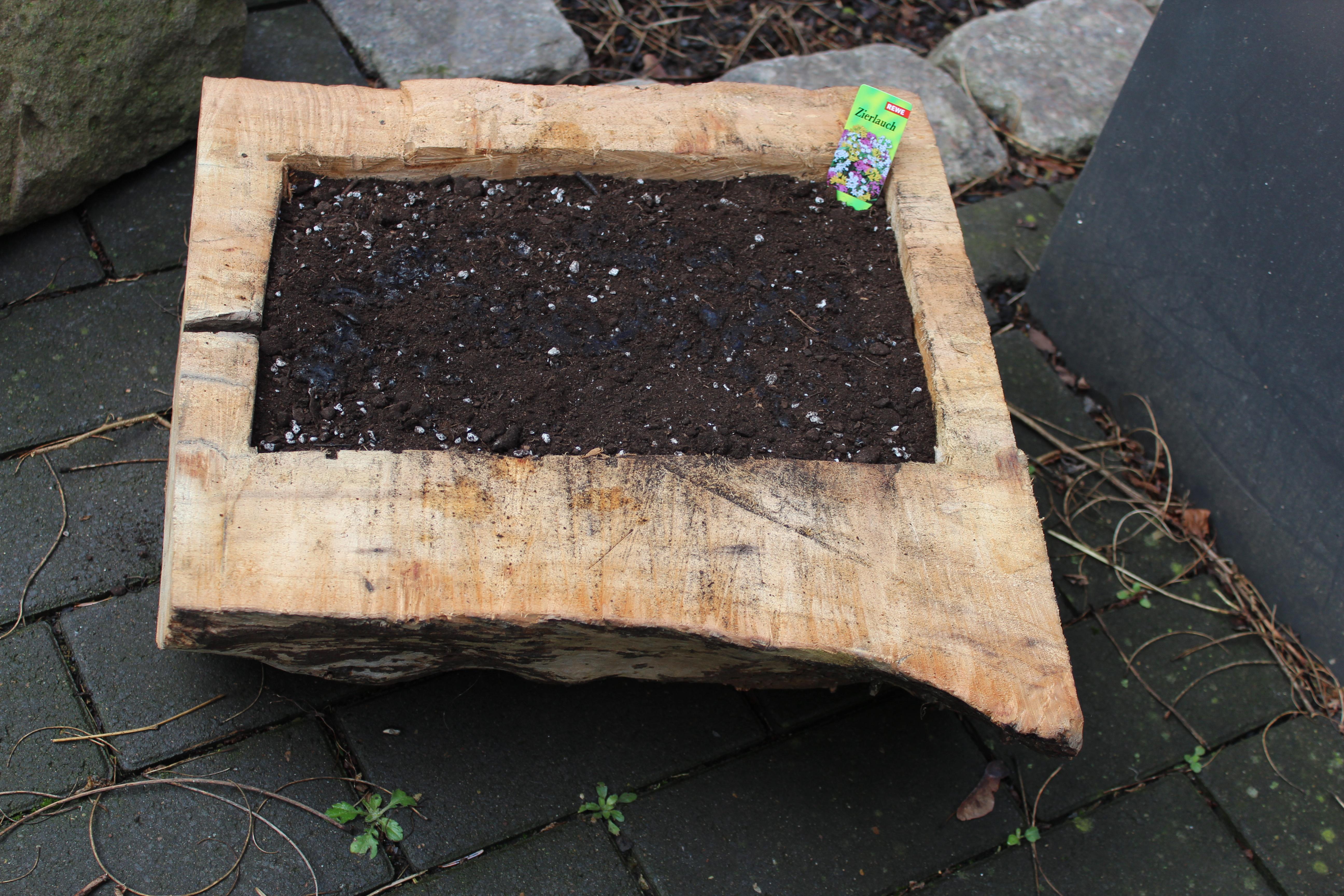 baumstamm bepflanzen alles ber wohndesign und m belideen. Black Bedroom Furniture Sets. Home Design Ideas